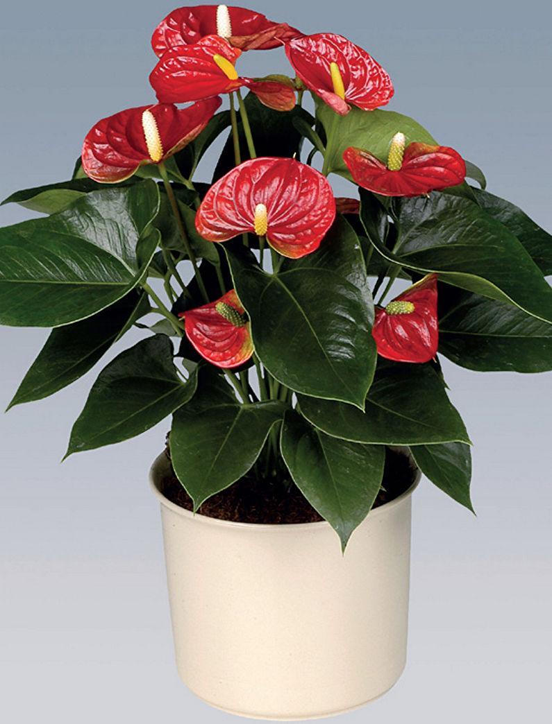 красивые домашние цветы фото и названия уход хоть один вопрос